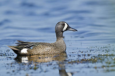 Photograph - Teal On The Water by Mike Fitzgerald