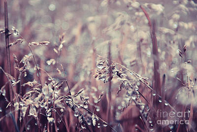 Photograph - Teardrops - Brownish by Aimelle