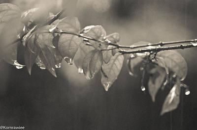 Kornrawiee Photograph - Tears From Heaven  by Kornrawiee Miu Miu
