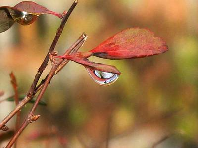 Photograph - Tears Of Autumn by Ioana Geacar