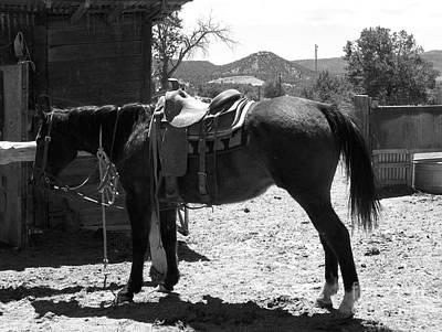 Photograph - Teddy My Ride by Pamela Walrath