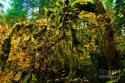 Photograph - Temperate Rain Forest by Adam Jewell