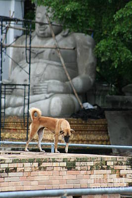 Photograph - Temple Dog And Buddha by Nola Lee Kelsey