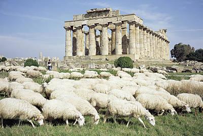 Hera Photograph - Temple Of Hera by Dirk Wiersma
