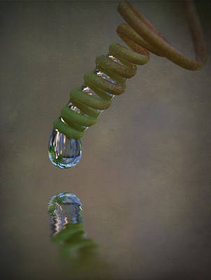Tendril Droplet  Art Print by Kym Clarke