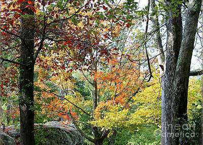 Photograph - Tennessee Autumn by Carol Groenen