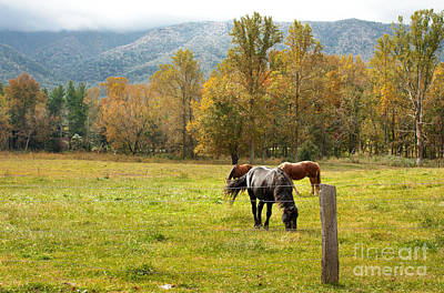 Photograph - Tennessee Horses by Lena Auxier