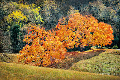 Photograph - Tennessee Orange Autumn Trees by Cheryl Davis