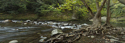 Tree Roots Photograph - Tennessee Stream Panorama 6045 6 by Michael Peychich