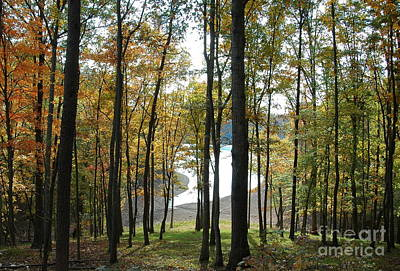Photograph - Tennessee Woods by Nancy Greenland
