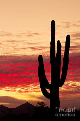 Tequila Sunrise Art Print by James BO  Insogna