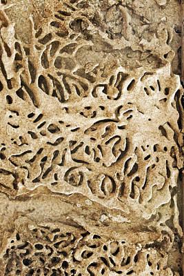 Maze Lava Photograph - Termites Mazey Tracks by Kantilal Patel