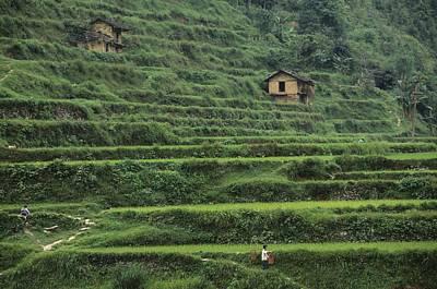 Terraces For Agriculture Art Print by Raymond Gehman