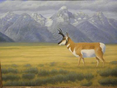 Teton Drawing - Teton Antelope by Alan Suliber