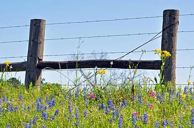 Photograph - Texas Fence Posts by Teresa Blanton