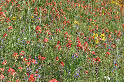 Photograph - Texas Hill Country Wildflowers by Gregory Scott