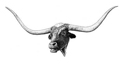 Drawing - Texas Longhorn by Scott Woyak