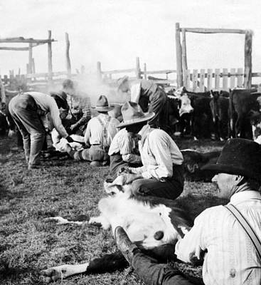 Working Cowboy Photograph - Texas Ranchers Branding Calves   C 1905 by International  Images