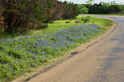 Photograph - Texas Roadside Bluebonnets by Michael Flood