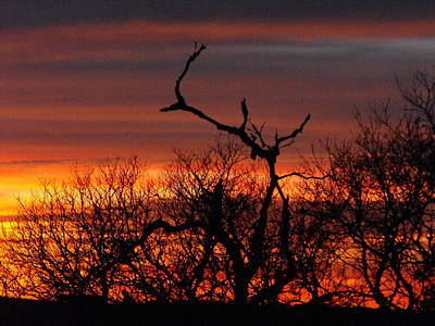 Photograph - Texas Spanish Oak Tree  Sunset by Rebecca Cearley
