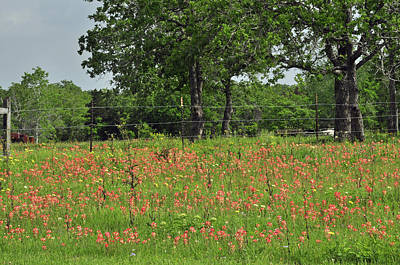 Photograph - Texas Wildflowers by Helen Haw