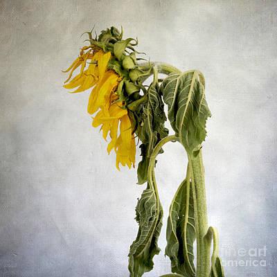 Textured Sunflower Art Print by Bernard Jaubert