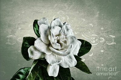 Decor Photograph - Textured Treasure by Cris Hayes
