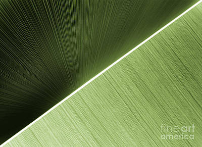 Photograph - Patterns And Colors. Green. by Ausra Huntington nee Paulauskaite