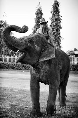 Photograph - Thai Elephant Roar by Thanh Tran