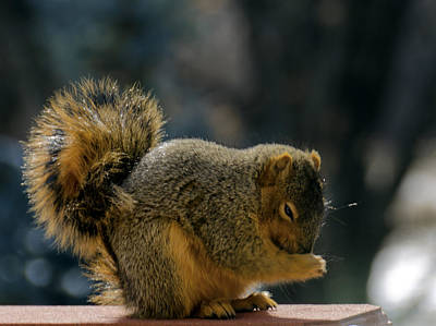 Squirrel Photograph - Thank You For The Nuts by LeeAnn McLaneGoetz McLaneGoetzStudioLLCcom