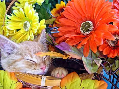 Thanksgiving Kitten Asleep In A Gerbera Daisy Basket - Kitty Cat In Fall Autumn Season Colours  Art Print by Chantal PhotoPix