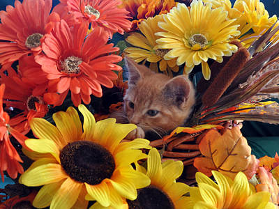 Thanksgiving Kitten Sitting In A Flower Basket Peeking Through Sunflowers - Kitty Cat In Falltime  Art Print by Chantal PhotoPix