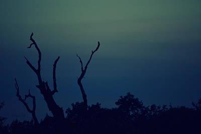 Photograph - That Dead Tree by Rima Biswas