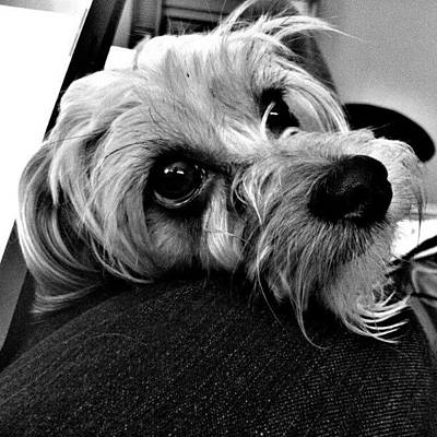 Expression Wall Art - Photograph - #that #hot #girl's #cute #dog #again by Kev Thibault