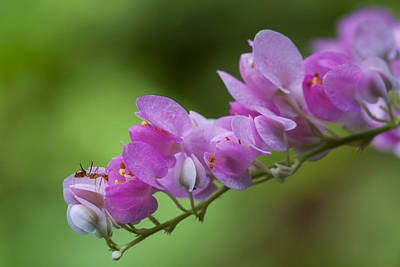 Photograph - The Ant And The Flower by Zoe Ferrie