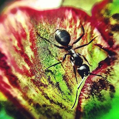 Igaddict Photograph - The Ants Have Arrived by Christopher Campbell