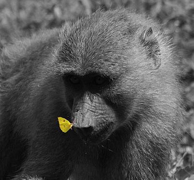 Digital Art - The Baboon And The Butterfly by Carrie OBrien Sibley