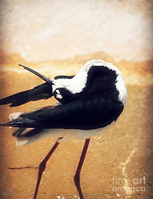 The Ballerina Bird Art Print by Peggy Franz