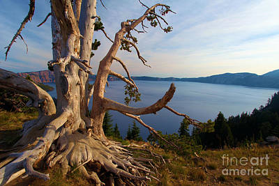 Photograph - The Banks Of Crater Lake by Adam Jewell