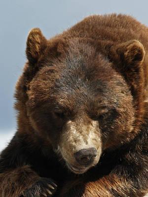 Photograph - The Bear 2 by Ernie Echols