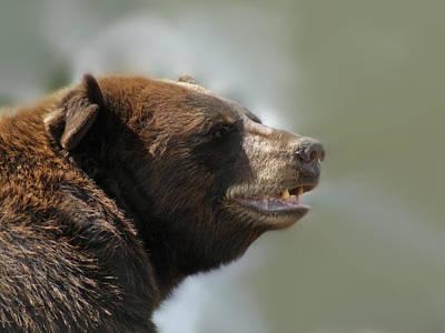 Photograph - The Bear by Ernie Echols