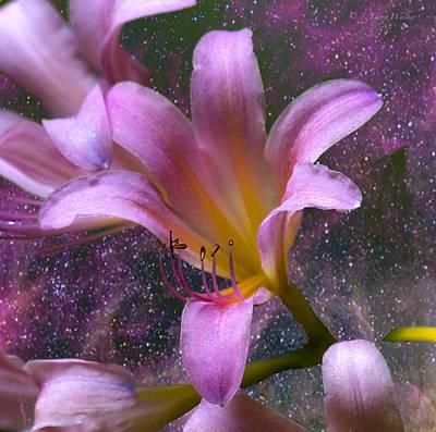 Digital Art - The Beauty Of Pollination by J Larry Walker