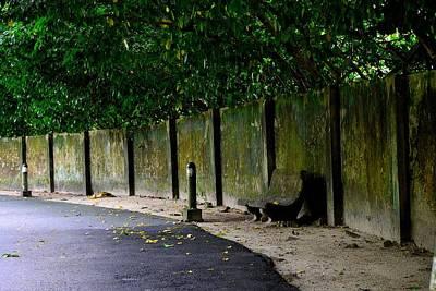 Photograph - The Bench by Ku Azhar Ku Saud