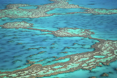 Whitsunday Photograph - The Big Reef, Whitsunday Islands, Australia by Chantal Ferraro