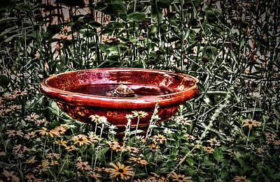 Photograph - The Bird Bath by  Onyonet  Photo Studios