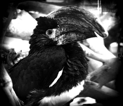 Photograph - The Bird by Radoslav Nedelchev