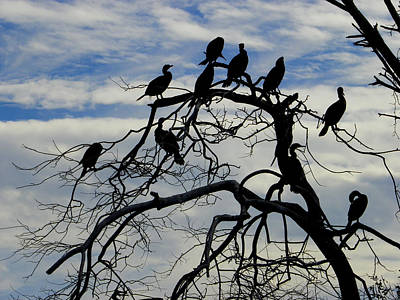Photograph - The Bird Tree by Judy Wanamaker