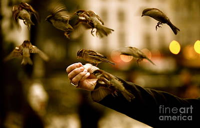 Trust Photograph - The Birds by Zarija Pavikevik