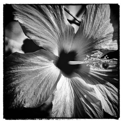 Grateful Dead - The Bloom II by David Patterson