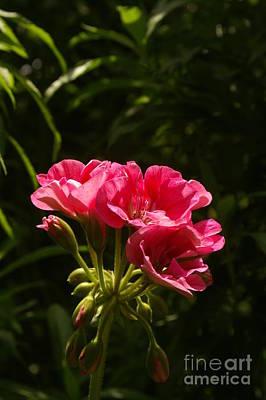Albert Bierstadt - The Bloom by Jack Norton